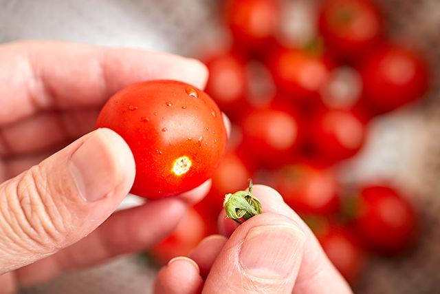ミニトマトのヘタを取っている写真