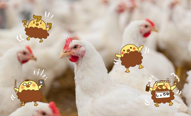 養鶏所のイメージとピヨからくん