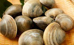 はまぐりとどう違う!? ホンビノス貝の美味しい食べ方ガイド