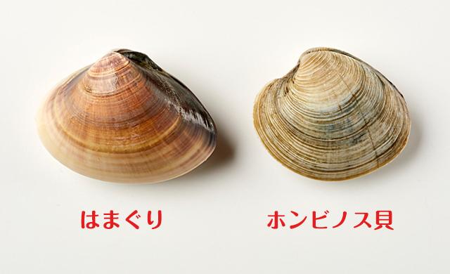 はまぐりとホンビノス貝の比較1