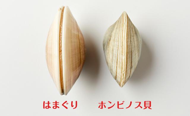 はまぐりとホンビノス貝の比較2
