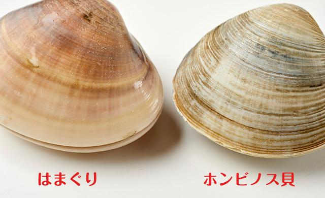 はまぐりとホンビノス貝の比較3