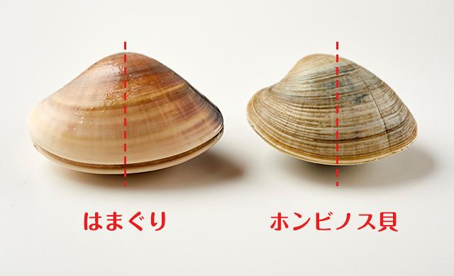 はまぐりとホンビノス貝の比較4