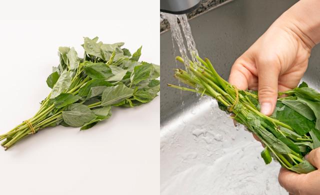 モロヘイヤの茎の先端を輪ゴムで束ねた写真(左)束ねたモロヘイヤを流水で洗っている写真(右)