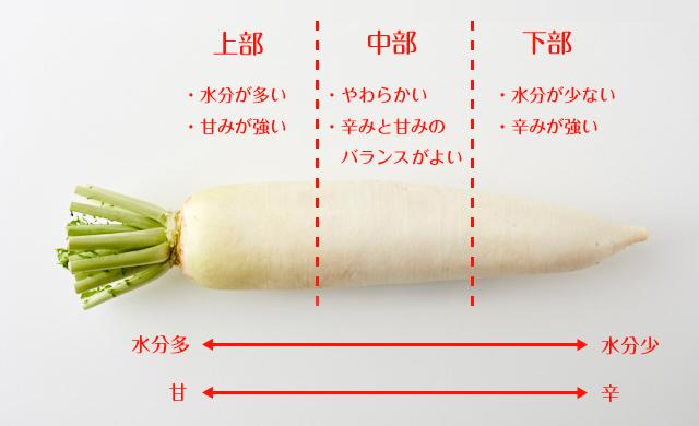部位別の特徴が入った大根の写真