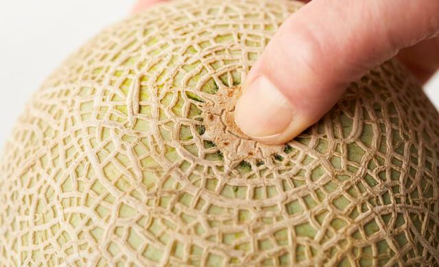 メロンのおしりを親指で押している写真