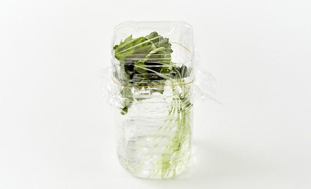三つ葉をペットボトルに入れている写真