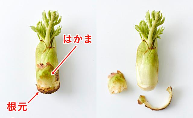 タラの芽とタラの芽のはかまをとった写真