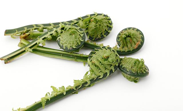 茎に小さな葉がついているこごみの写真