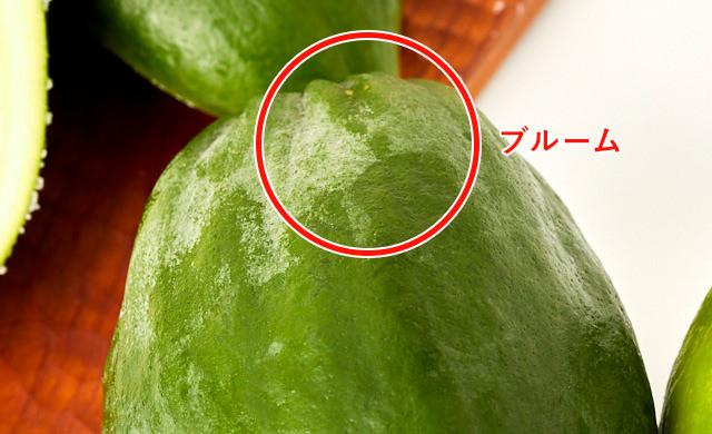 果粉がついている新鮮な青パパイヤ写真